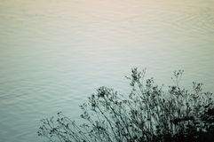 λίμνη φυτών Στοκ φωτογραφίες με δικαίωμα ελεύθερης χρήσης