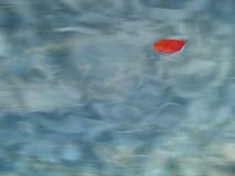 λίμνη φύλλων μήλων στοκ εικόνες με δικαίωμα ελεύθερης χρήσης
