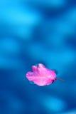 λίμνη φύλλων Στοκ Εικόνες