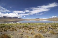 Λίμνη φλαμίγκο στη Βολιβία Στοκ εικόνα με δικαίωμα ελεύθερης χρήσης