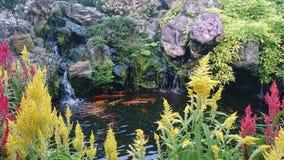 Λίμνη ψαριών ευημερίας Στοκ φωτογραφίες με δικαίωμα ελεύθερης χρήσης