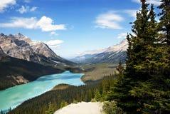 Λίμνη Banff Peyto στοκ εικόνες