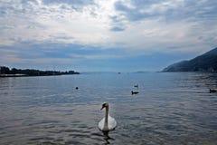 Λίμνη Bienne του Κύκνου Στοκ φωτογραφίες με δικαίωμα ελεύθερης χρήσης