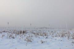 Λίμνη Comana το χειμώνα Στοκ Φωτογραφίες
