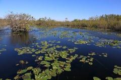 Λίμνη Everglades Στοκ Φωτογραφία