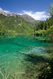 λίμνη jiuzhaigou χλόης Στοκ Εικόνες