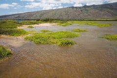 Λίμνη Kealia με διάφορα της Χαβάης ξυλοπόδαρα στοκ φωτογραφία