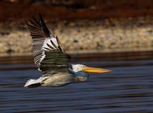Λίμνη Kerkini Ελλάδα επιφύλαξης φύσης Στοκ εικόνες με δικαίωμα ελεύθερης χρήσης