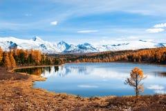 Λίμνη Kidelu στα δασικά και χιονισμένα βουνά φθινοπώρου σε Altai, Σιβηρία, Ρωσία στοκ φωτογραφία