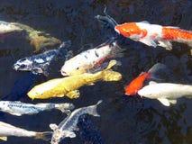 Λίμνη Koi Στοκ φωτογραφίες με δικαίωμα ελεύθερης χρήσης