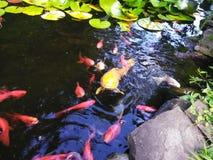 Λίμνη Koi στοκ φωτογραφία με δικαίωμα ελεύθερης χρήσης