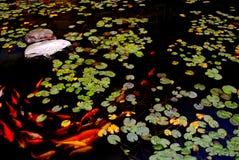 λίμνη koi Στοκ Φωτογραφίες