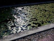 Λίμνη Lotus Στοκ Εικόνα
