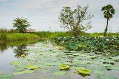 Λίμνη Lotus Στοκ εικόνες με δικαίωμα ελεύθερης χρήσης