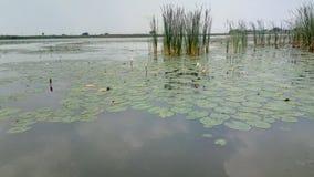 Λίμνη Lotus Στοκ φωτογραφίες με δικαίωμα ελεύθερης χρήσης