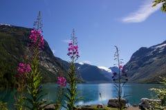 Λίμνη Lovatnet στη Νορβηγία στην Ευρώπη Στοκ εικόνες με δικαίωμα ελεύθερης χρήσης