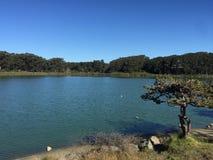 Λίμνη Merced Σαν Φρανσίσκο Στοκ φωτογραφία με δικαίωμα ελεύθερης χρήσης