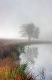 λίμνη misty Στοκ Εικόνες