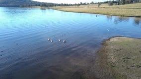 Λίμνη Moogerah στο Queensland κατά τη διάρκεια της ημέρας φιλμ μικρού μήκους