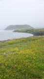 Λίμνη Myvatn pseudocrater και κίτρινα λουλούδια Στοκ Φωτογραφία