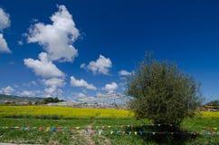 Λίμνη Qinghai και λουλούδι βιασμών Στοκ Φωτογραφία