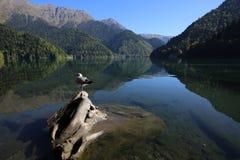 λίμνη Ritsa στον Καύκασο στοκ εικόνες
