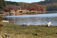 Λίμνη Shidakako το φθινόπωρο Στοκ φωτογραφία με δικαίωμα ελεύθερης χρήσης