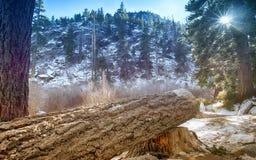 Λίμνη Tahoe Forrest στοκ φωτογραφίες