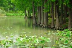 Λίμνη Tai Wuxi Κίνα νησιών χελωνών Στοκ εικόνα με δικαίωμα ελεύθερης χρήσης