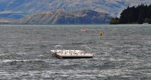 Λίμνη Wanaka - πουλιά στοκ εικόνα