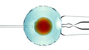 Λίπανση, που βοηθιέται τεχνητή Λιπαμένο κύτταρο, ωάριο Τεχνητό μπόλιασμα Άποψη κάτω από ένα μικροσκόπιο επιστήμη τρισδιάστατη από διανυσματική απεικόνιση