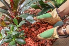 Λίπανση του κήπου με το ξύλινο τσιπ Στοκ φωτογραφία με δικαίωμα ελεύθερης χρήσης