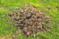 Λίπασμα αλόγων Στοκ φωτογραφία με δικαίωμα ελεύθερης χρήσης