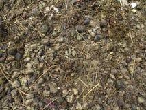 Λίπασμα αλόγων Στοκ φωτογραφίες με δικαίωμα ελεύθερης χρήσης