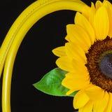 Λαβές κινηματογραφήσεων σε πρώτο πλάνο της φωτεινής τσάντας από το γνήσιο δέρμα, διακοσμημένο λουλούδι, ηλίανθος Έννοια των αγορώ Στοκ Εικόνες