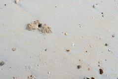 Λαβή παραλιών και καβουριών Στοκ Φωτογραφίες