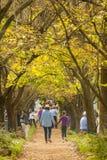 Λαβή του Γιοχάνεσμπουργκ, της Νότιας Αφρικής, του 05/10/2014, μητέρων και κορών Στοκ Φωτογραφία