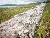 Λαβίδες στο driftwood Στοκ εικόνες με δικαίωμα ελεύθερης χρήσης