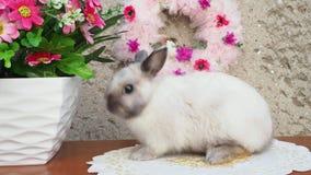 Λαγουδάκι Πάσχας κοντά στο στεφάνι άνοιξη Λίγη νάνα συνεδρίαση κουνελιών κοντά στα λουλούδια φιλμ μικρού μήκους