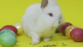 Λαγουδάκι Πάσχας στο κίτρινο υπόβαθρο με τα χρωματισμένα αυγά φιλμ μικρού μήκους