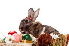 Λαγουδάκι, αυγά και λουλούδια Στοκ Εικόνα