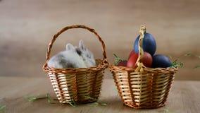 Λαγουδάκι και αυγά Πάσχας σε δύο καλάθια απόθεμα βίντεο
