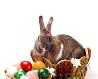 Λαγουδάκι και πολύχρωμα αυγά στοκ φωτογραφίες με δικαίωμα ελεύθερης χρήσης