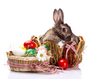 Λαγουδάκι και easterl αυγά στοκ εικόνες