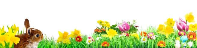 Λαγουδάκι Πάσχας, λιβάδι λουλουδιών, που απομονώνεται, έμβλημα Στοκ Εικόνες