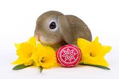 Λαγουδάκι Πάσχας με κίτρινο Daffodils και το καλλιτεχνικό αυγό Πάσχας Στοκ φωτογραφίες με δικαίωμα ελεύθερης χρήσης