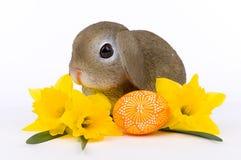 Λαγουδάκι Πάσχας με κίτρινο Daffodils και το καλλιτεχνικό αυγό Πάσχας Στοκ Εικόνες