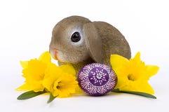 Λαγουδάκι Πάσχας με κίτρινο Daffodils και το καλλιτεχνικό αυγό Πάσχας Στοκ Φωτογραφίες
