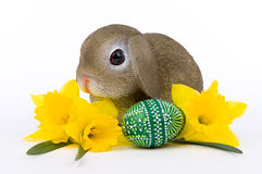 Λαγουδάκι Πάσχας με κίτρινο Daffodils και το καλλιτεχνικό αυγό Πάσχας Στοκ φωτογραφία με δικαίωμα ελεύθερης χρήσης