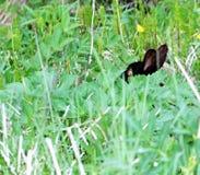Λαγουδάκι στη φύση Στοκ φωτογραφία με δικαίωμα ελεύθερης χρήσης